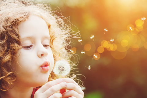 Young girl blows dandelion seeds through the air